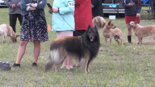 Popular dog show returns to Orillia