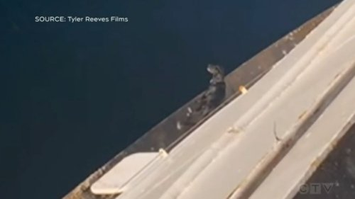 Dog rescued after being stranded on edge of BC Ferries vessel