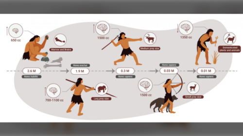 Humans were actually apex predators who ate meat for 2 million years: study