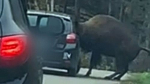 Ottawa hospitals suspend 200 unvaccinated employees and a bison gets head stuck in a car window: Top five stories this week