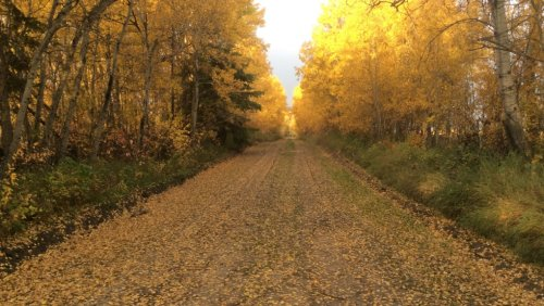 Autumn chores ahead? Nature advocacy group suggests putting them off for now