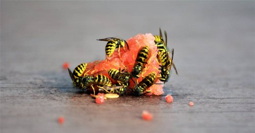 ¿Cuáles son los repelentes naturales para cada tipo de insecto?