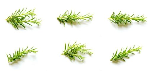 Rosemary Guide - Best Uses, Tips, Recipes | Cuisinevault
