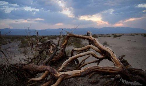 ABD'de sıcaklıklar rekor kırıyor, ülkenin yüzde 38'i kuraklık etkisi altında