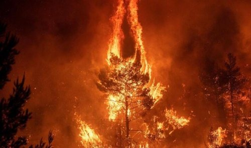 Manisa Valiliği: Terör operasyonunda yakalananların yangınlarla ilgisi yok