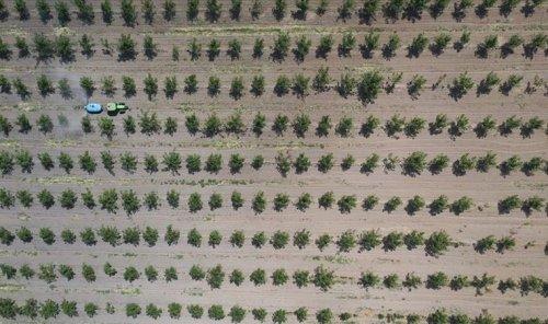 Yaklaşık 13 milyon metrekare Hazine arazisi, tıbbi ve aromatik bitkilerin yetiştirilmesi için kiraya verildi