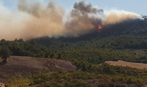 Son dakika: Bir orman yangını haberi de Osmaniye'den geldi