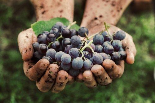 Des actus (positives) : Un immense site viticole vieux de 1500 ans découvert en Israël, Matt Damon et la justice ordalique du Moyen Âge - Curieux!