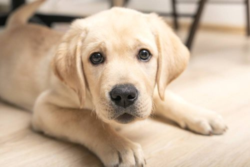 How to Discipline a Puppy Without Being Mean