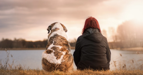 New Study Finds Dogs Demonstrate Empathy And Understand Basic Emotions