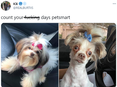 Dog Owner Goes Viral After Tweeting Terrible Before And After Pictures Of His Dog's Haircut