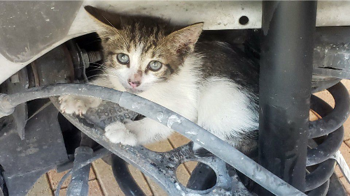 Deputies in Florida Keys rescue kitten that hitched ride in patrol car