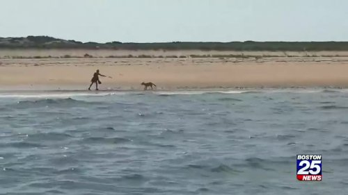 Wild coyote circles woman on Cape beach for 10 minutes but never bites