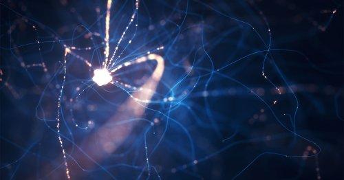 How Computationally Complex Is a Single Neuron?   Quanta Magazine