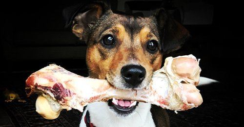 What Bones Can Dogs Eat? It's a Little More Complicated Than You Thought