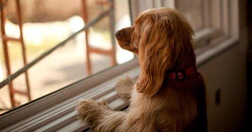 How Long Can You Leave a Dog Alone? The Answer Might Surprise You