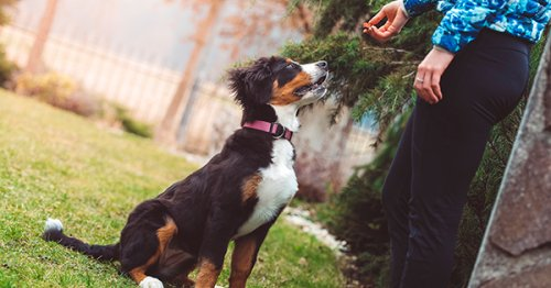 9 Trainer Hacks That Make Training Your Dog So Much Easier