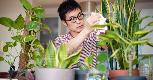Did You Know You Should Be Spring Cleaning Your Indoor Plants? Here's How to Do It