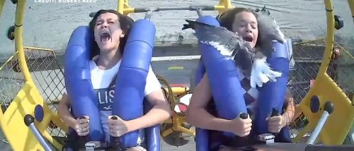 Girl Riding Amusement Park Ride Grabs Seagull That Flew Into Her Face, Chucks The Bird Away