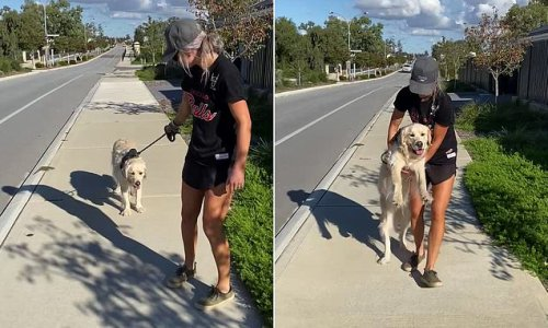 Woman is forced to carry her stubborn golden retriever home