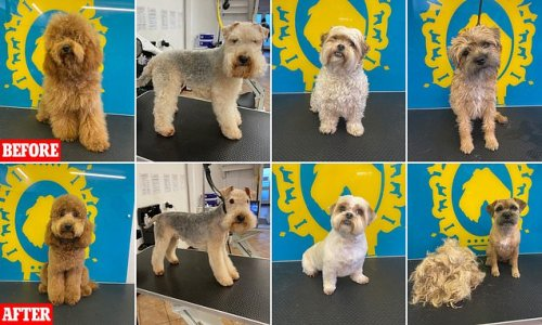Dogs transform perfect pooches after getting post-lockdown haircuts