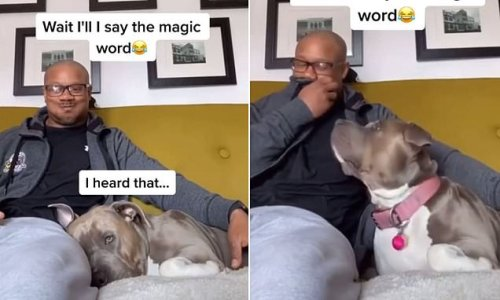 Sleeping dog will ONLY wake up if her owner says the 'magic word