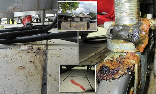 Mice-infested McDonald's is ordered to close