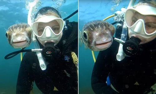 Incredible moment diver takes selfie with a curious pufferfish