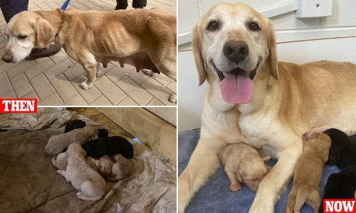 Adelaide family convicted of animal cruelty after RSPCA seizes 14 dogs