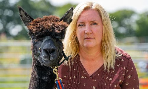 Alpaca carer seeks Boris Johnson intervention as animal to be put down
