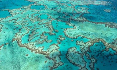 UNESCO determines the Great Barrier Reef is NOT in danger
