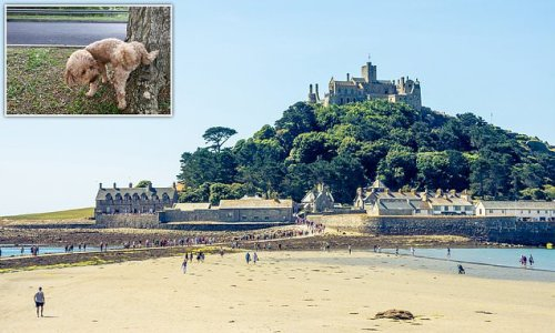 National Trust bans dogs from Cornish tourist spot St Michael's Mount
