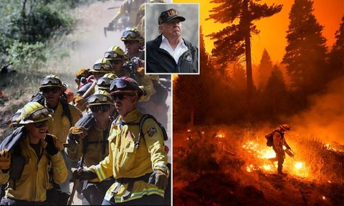 California will spend $500 million to thin forests to prevent fires
