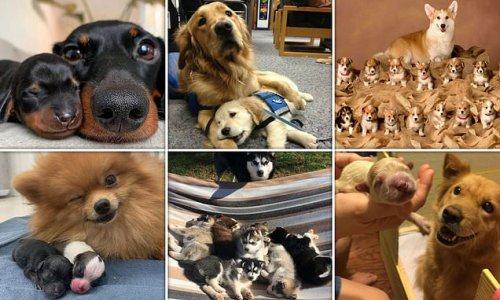 Adorable pictures of proud dog parents posing with their puppies