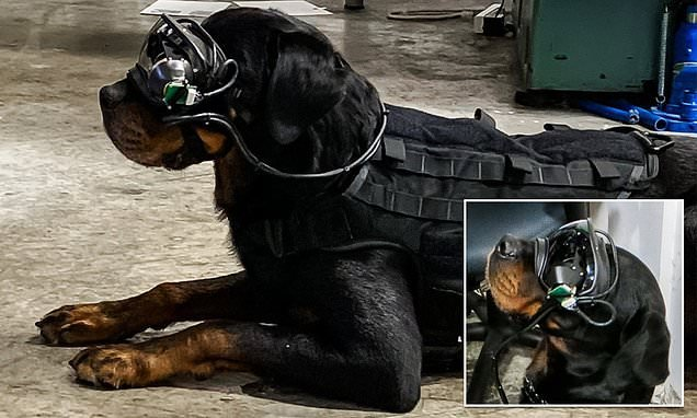 US Army is developing AR goggles for DOGS to help sniff out bombs