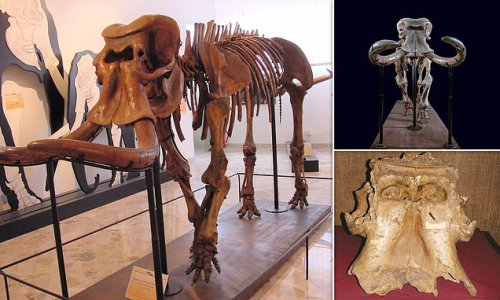 Dwarf elephant evolved from 'one of the largest ever land mammals'