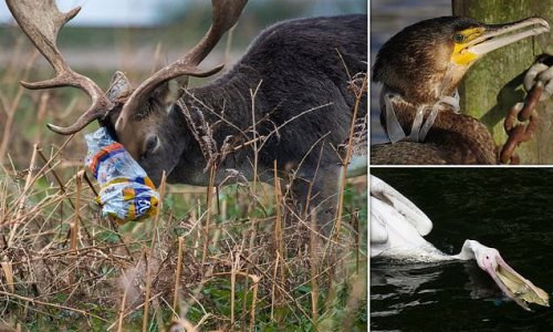 Shocking images reveal effects of litter on wildlife in London parks