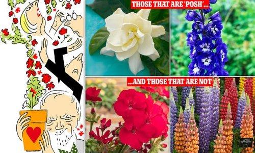 Why IS garden snobbery in full bloom?