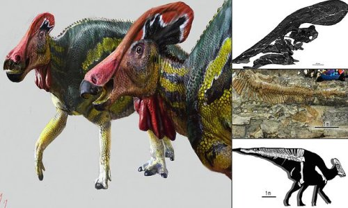 'Talkative' dino made sounds to scare away predators and attract mates