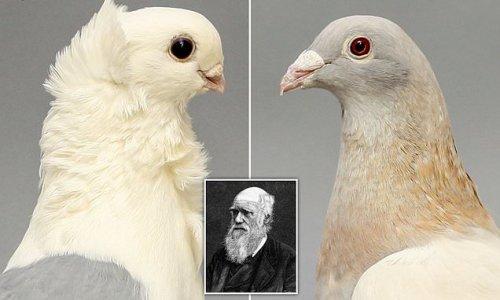 Darwin's short-beak enigma is SOLVED in new study