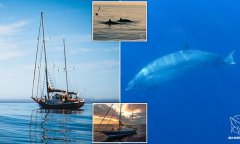 Discover whale species
