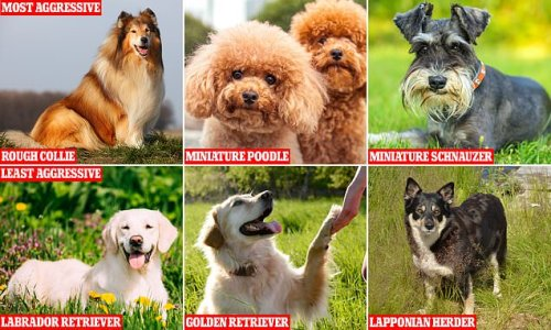 Scientists reveal most AGGRESSIVE dog breeds, with Rough Collies worst