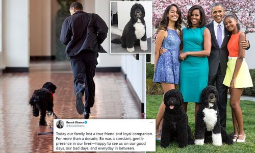 Heartbroken former president says farewell to family dog Bo Obama