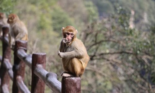 Scientists successfully create viable sperm from monkey stem cells