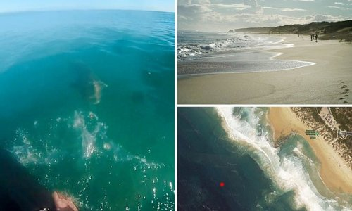 Bodysurfer reveals terrifying moment he came face to face with a shark