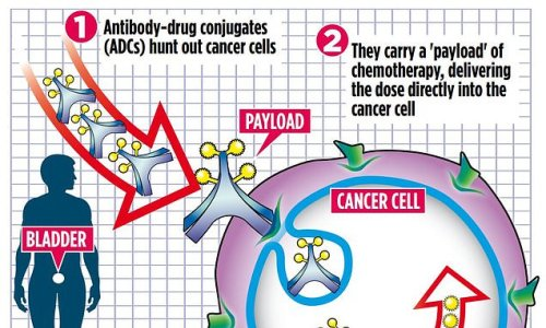 New breed of drug could replace chemotherapy