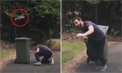 Man forced to duck behind bin to escape swooping plover