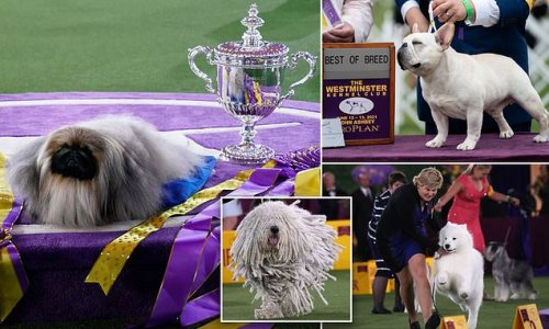 Pampered pups vie for best in show at the Westminster dog show finals