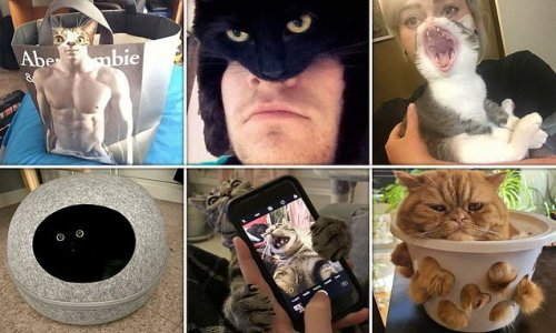 Cat lovers share pictures of their felines being unintentionally funny