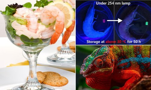 Artificial colour-changing material can detect seafood freshness